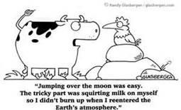 Cow Humor