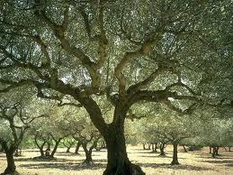 Under My Branches