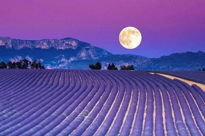 Lavender Dreams – NaPoWriMo Day 16