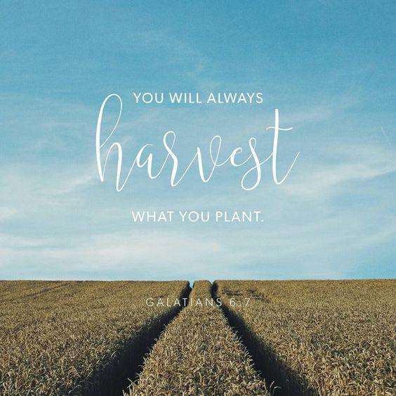 harvest 2